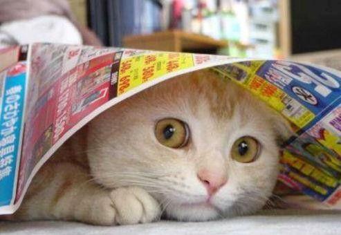 Mr le chat se cache sous un journal